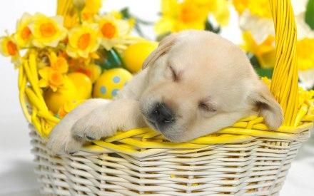 springtime_snooze-wide